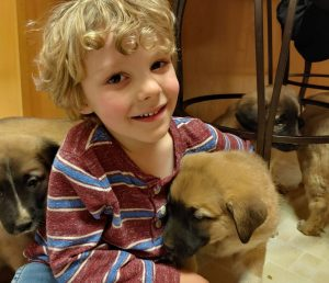 Columbia_Veterinary_Hospital_Puppies
